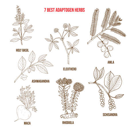 Best adaptogen herbs. Hand drawn vector set of medicinal plants