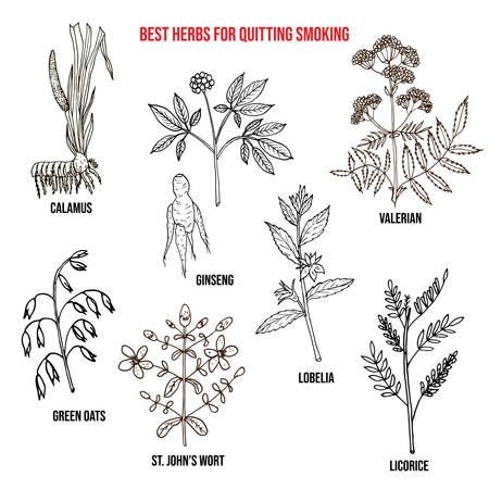 Collection of best herbs for quitting smoking. Hand drawn botanical vector illustration