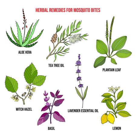 Meilleurs remèdes à base de plantes pour les piqûres de moustiques. Ensemble de vecteurs dessinés à la main de plantes médicinales