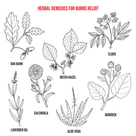 Collection of best herbs for burns relief. Hand drawn botanical vector illustration