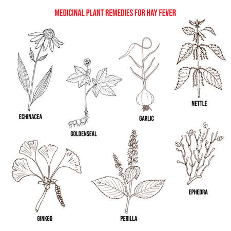 Best herbal remedies for hay fever. Hand drawn vector set of medicinal plants
