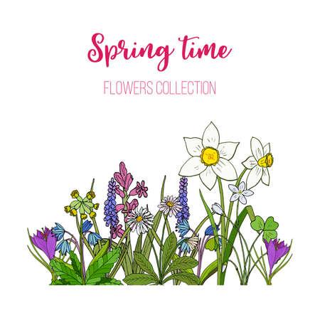 Spring flowers crocus, scilla, primula. Hand drawn botanical vector illustration Ilustração