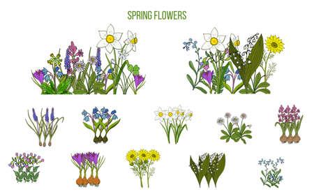 Spring flowers set crocus, scilla, primula. Hand drawn botanical vector illustration Ilustração