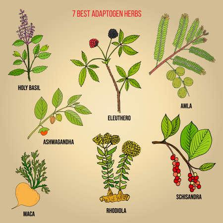 Le migliori erbe adattogene Insieme di vettore disegnato a mano di piante medicinali Vettoriali