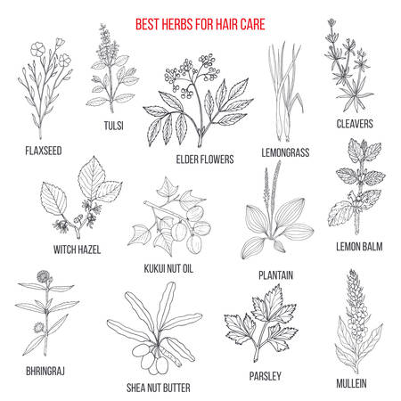 Best medicinal herbs for hair care. Vector hand-drawn collection