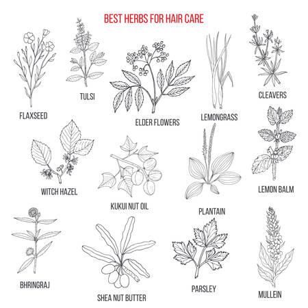 Meilleures herbes médicinales pour le soin des cheveux. Collection de vecteur dessiné à la main Vecteurs