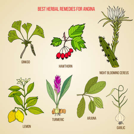 Collection of best herbs for angina treatment. Hand drawn botanical vector illustration