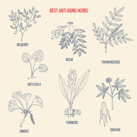 Best anti-aging herbs collection. Hand drawn botanical vector illustration Vector Illustration