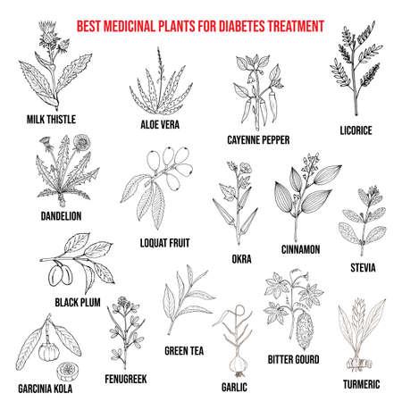 Kräuter und Gewürze, die Diabetes bekämpfen. Handgezeichneter Vektorsatz von Heilpflanzen