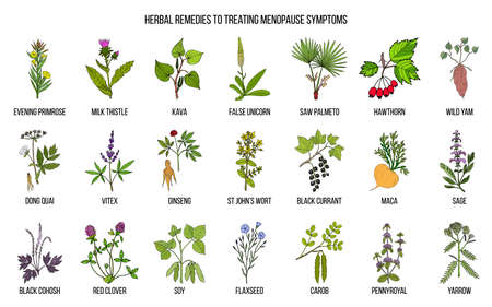 Best herbs for menopause symptom treatment. Hand drawn set of medicinal herbs Ilustracja