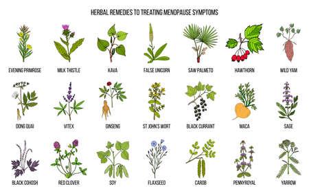Meilleures herbes pour le traitement des symptômes de la ménopause. Ensemble d'herbes médicinales dessiné à la main
