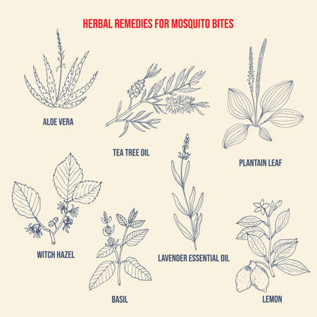 Best herbal remedies for mosquito bites