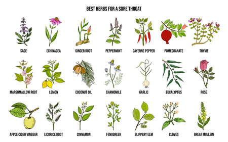 Best herbs for a sore throat. Hand drawn vector set of medicinal plants