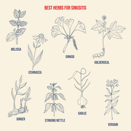 Best herbal remedies for sinusitis. Hand drawn vector set of medicinal plants