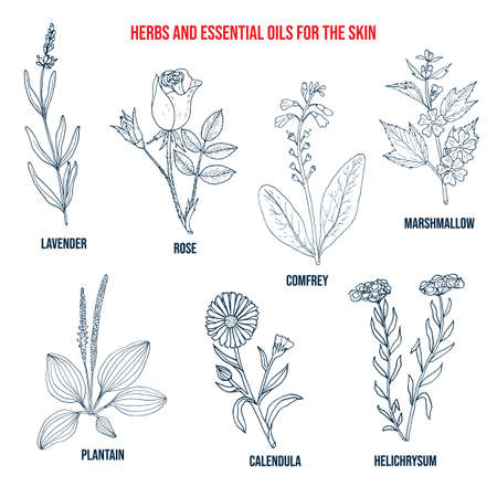 Herbs and essential oils for the skin. Hand drawn vector set of medicinal plants