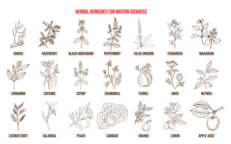 Best herbal remedies for motion sickness. Hand drawn vector set of medicinal plants Stock Vector - 125656473