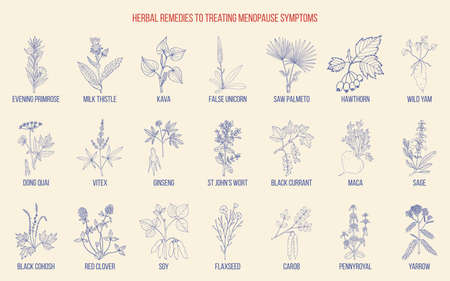 Best herbs for menopause symptom treatment. Hand drawn set of medicinal herbs  イラスト・ベクター素材