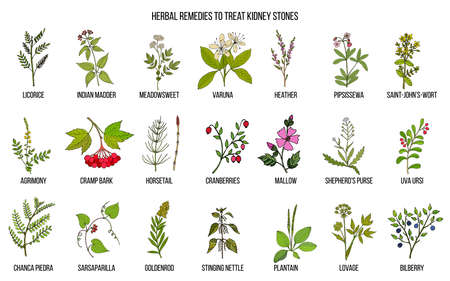 Best herbs for kidney stone disease Illustration
