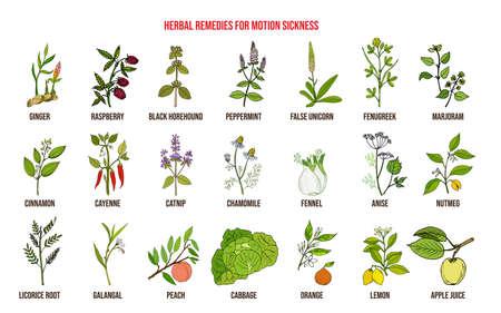 Beste pflanzliche Heilmittel gegen Reisekrankheit. Handgezeichneter Vektorsatz von Heilpflanzen