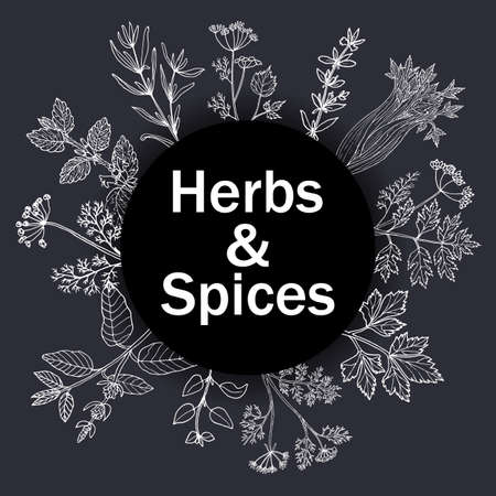 Hand drawn set of culinary herbs and spices. Vector illustration. Stock Illustratie