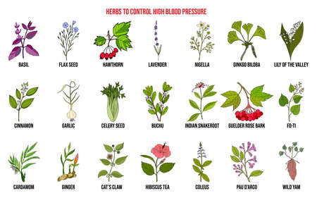 Best herbs to control high blood pressure Stock Illustratie