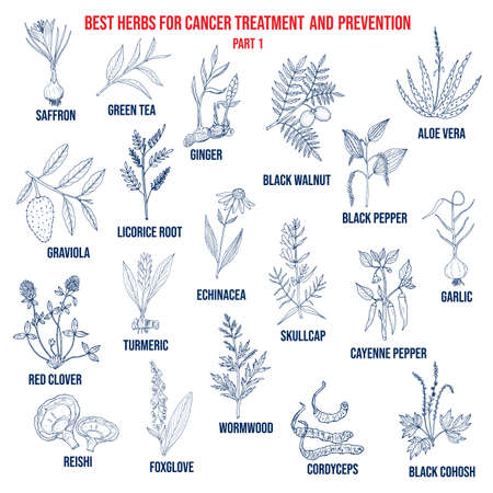Best herbs for cancer treatment and prevention part 1. Hand drawn vector set of medicinal plants