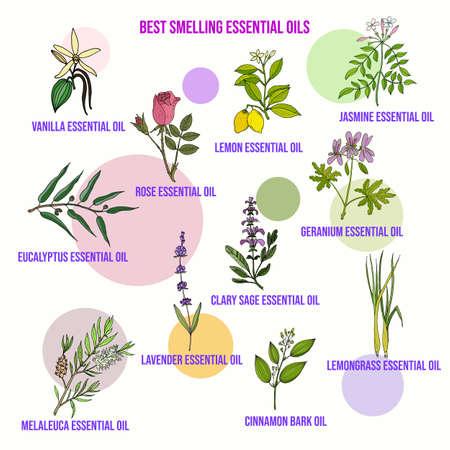 Les meilleures huiles essentielles odorantes Vecteurs