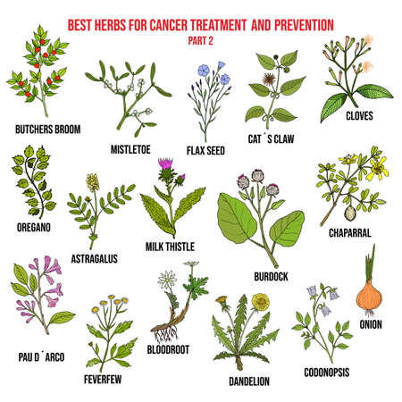 Best herbs for cancer treatment part 2