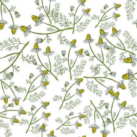 Seamless pattern with hand drawn medicinal plants. Vector herbal background Çizim
