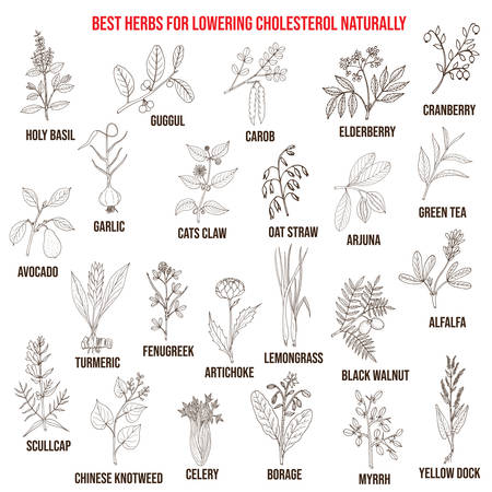 Best medicinal herbs for lowering cholesterol Illustration