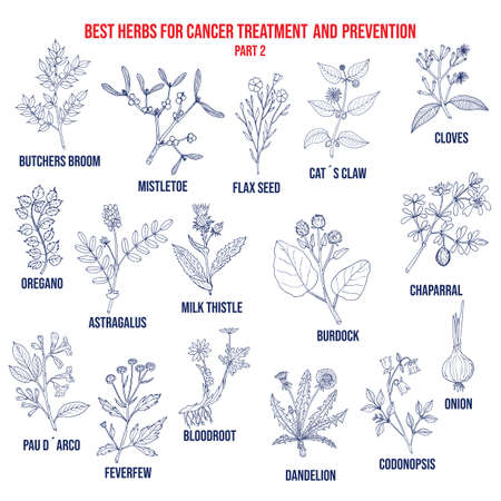 Best herbs for cancer treatment and prevention part 2. Hand drawn vector set of medicinal plants