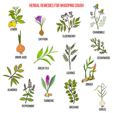 Herbal therapy for whooping couch Ilustracje wektorowe