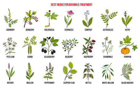 Best medicinal herbs to treat diarrhea Vectores