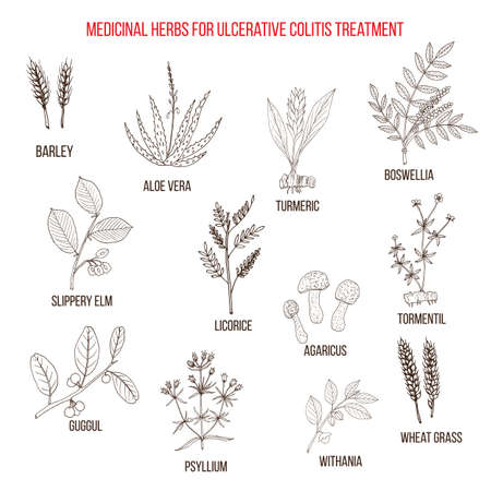 Best medicinal herbs to treat ulcerative colitis. Hand drawn vector set of medicinal plants