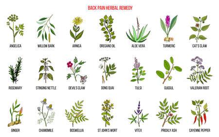 Remède contre les maux de dos à base de plantes