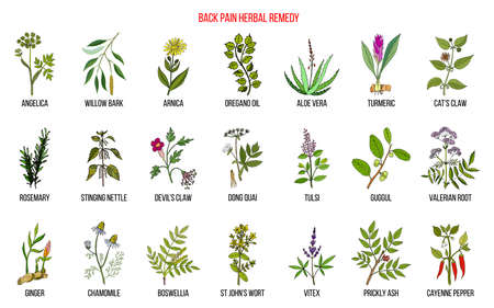 Back pain herbal remedy