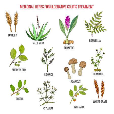 Best medicinal herbs to treat ulcerative colitis. Hand drawn vector set of medicinal plants