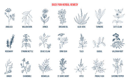 Back pain herbal remedy. Hand drawn vector set of medicinal plants