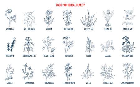 Remède contre les maux de dos à base de plantes. Ensemble de vecteurs dessinés à la main de plantes médicinales