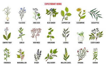 Best medicinal expectorant herbs