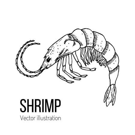 Shrimp sea animal Hand-drawn line sketch vector illustration Vectores
