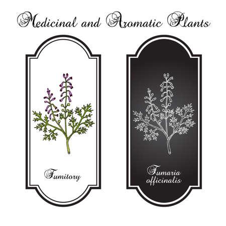 Fumitory Fumaria officinalis , or Earth smoke, medicinal plant. Hand drawn botanical vector illustration