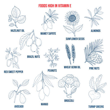 Natural herbs as source vitamin E nuts, vegetables, oils