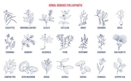 Meilleurs remèdes à base de plantes pour la laryngite. Illustration vectorielle botanique dessinés à la main