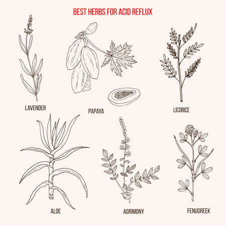Best herbal remedies for acid reflux Ilustracja