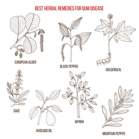Best herbal remedies for gum disease Vektorové ilustrace
