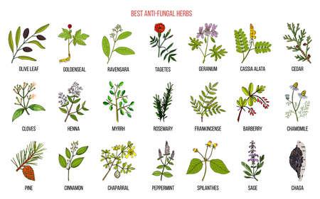 Meilleur ensemble d'herbes antifongiques. Illustration vectorielle botanique dessinés à la main