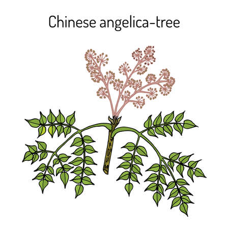 Wonderberry or sunberry Solanum retroflexum , medicinal plant