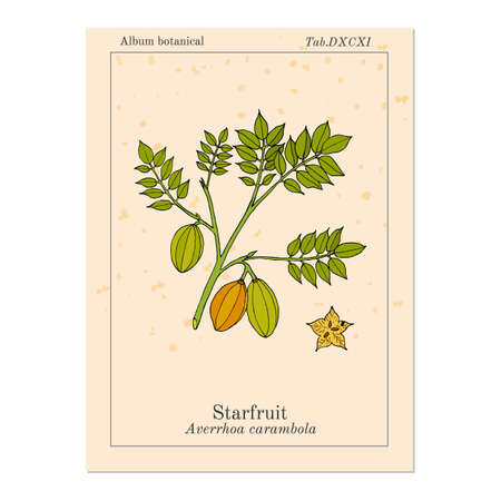 Starfruit Averrhoa carambola , medicinal plant