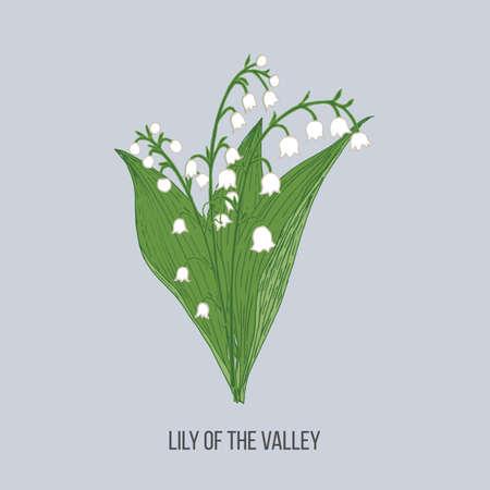 Lily of the valley Convallaria majalis Ilustração